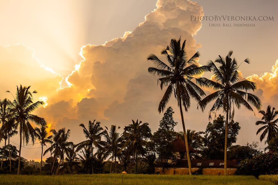 sunsets_(13).jpg