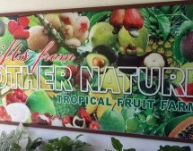 Au bout du monde : Tropical Farm, le paradis du fruit