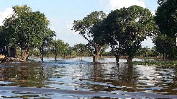 Tonlé Sap le lac du Mékong classé par l'UNESCO. Forêt
