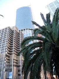 Sydney, Océanie, la terre promise de l'Océan indien. Entre ville et palmiers