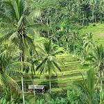 Galerie Rizières Tegalalang
