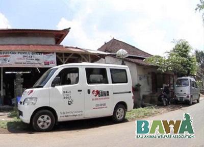 Protection des animaux à Bali : BAWA, la cour des miracles. Ambulance