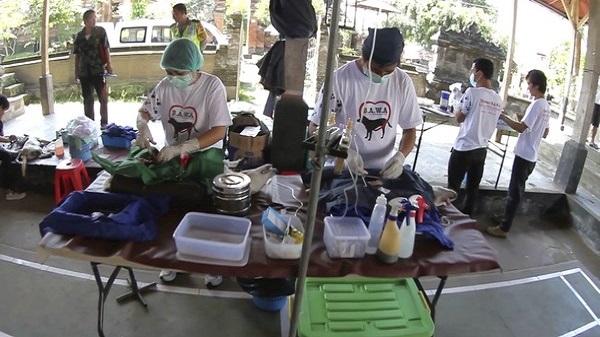Protection des animaux à Bali : BAWA, la cour des miracles