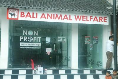 Protection des animaux à Bali : BAWA, la cour des miracles. Boutique
