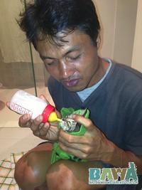 Protection des animaux à Bali : BAWA, la cour des miracles. Allaitement