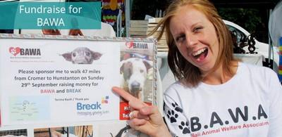 Protection des animaux à Bali : BAWA, la cour des miracles. Collecte