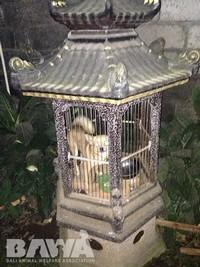 Protection des animaux à Bali : BAWA, la cour des miracles. Enfermement