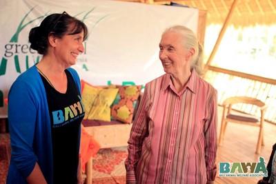 Protection des animaux à Bali : BAWA, la cour des miracles. Jane Goodall