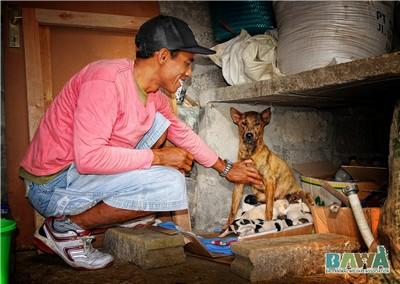 Protection des animaux à Bali : BAWA, la cour des miracles. Secours