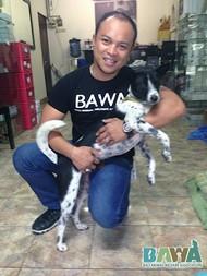 Protection des animaux à Bali : BAWA, la cour des miracles. Staff