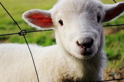 Vivre autrement : pourquoi être vegan? Par tendresse, Bordel! La tendresse