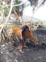 Bali plage : l'ouest, Negara, Medewi, Gilimanuk. Une vache sur la plage