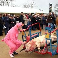 Galerie Auvergne Végétarienne Attitude AVA Saint cochon Mazirat