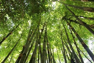 ecologie singapour