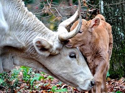 Omero Marongiu Perria, islam et végétarisme Les animaux ont une personnalité
