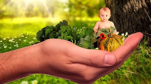 On vous dit tout sur l'arrivée de Bébé Veggie. Bébé végétarien