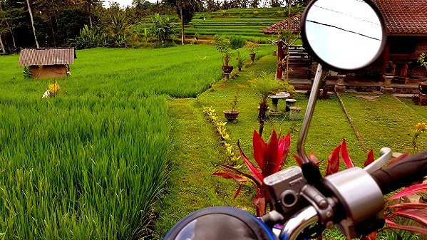 Voyager vegan à Bali